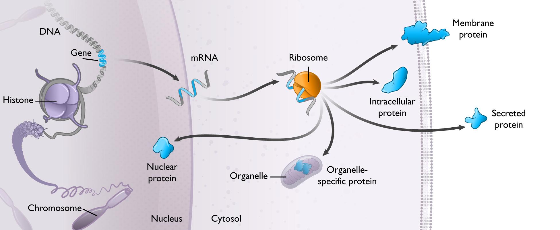 https://cdn.kscope.io/82869259e6e6063dc0e6b9cbf509149e-modularsynthesisproteinprod2.jpg